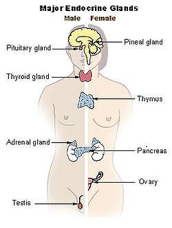 endocrine system, thyroid