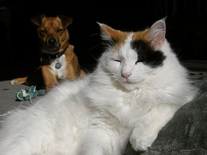 cute dog and cat, happy pets, friends,