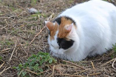uti symptoms in cats
